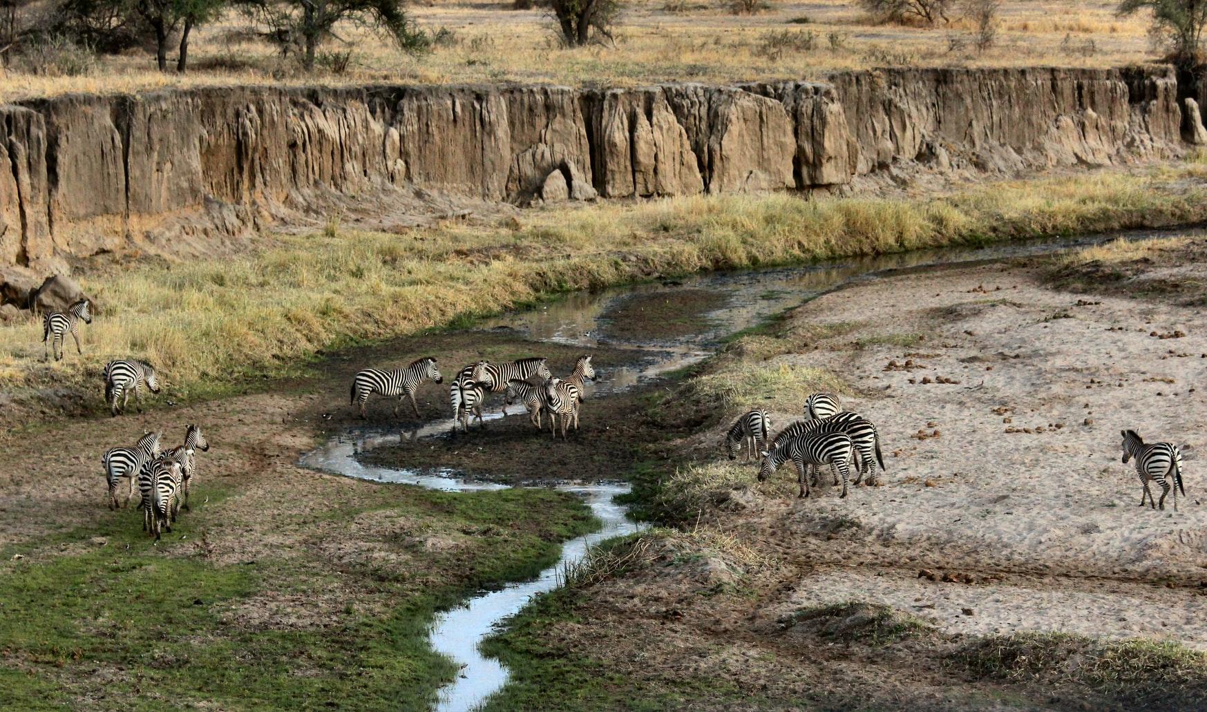 Tarangire National Park en Tanzania