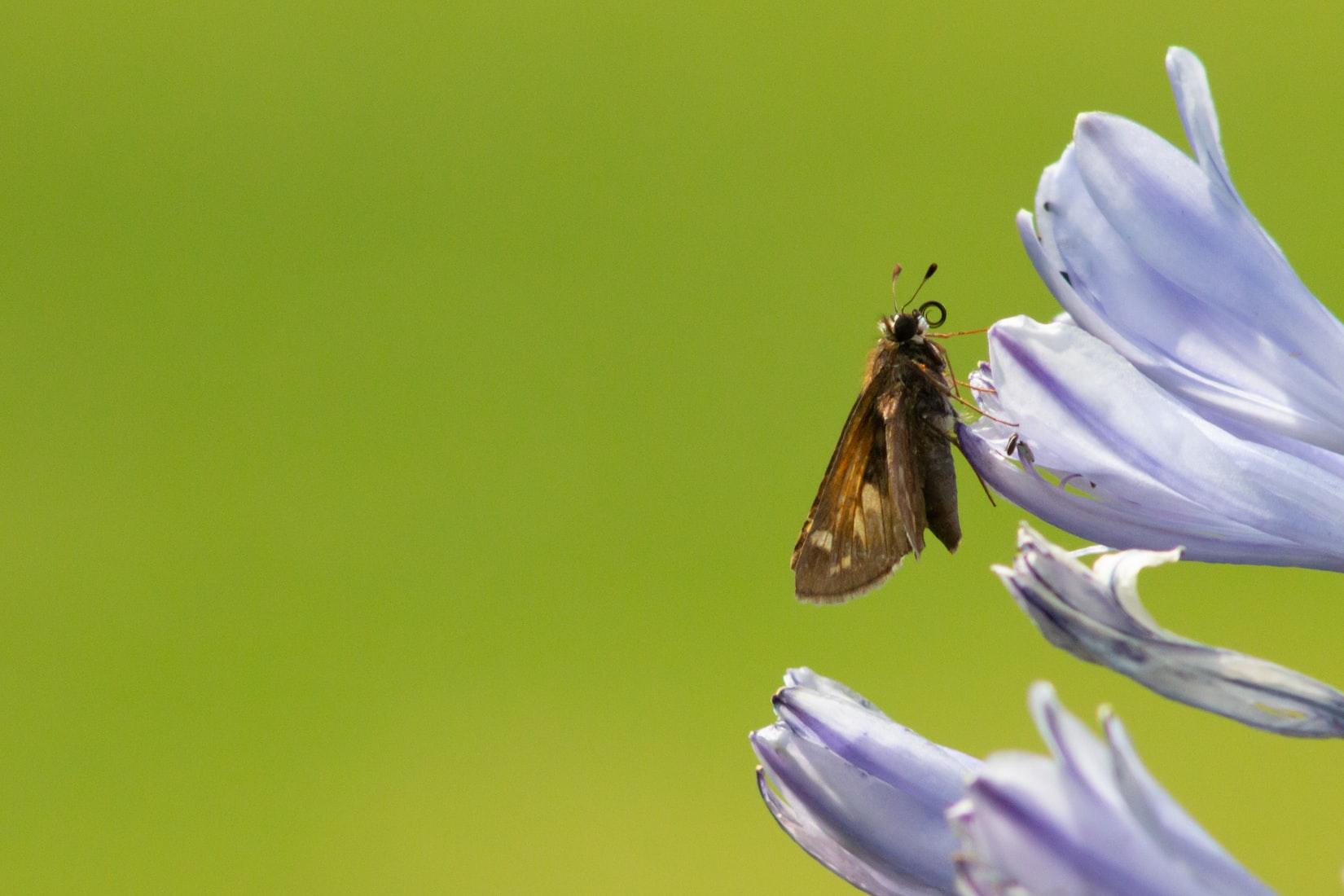 Mariposa monarca en el Valle de Bravo, en México / Foto: Unplash