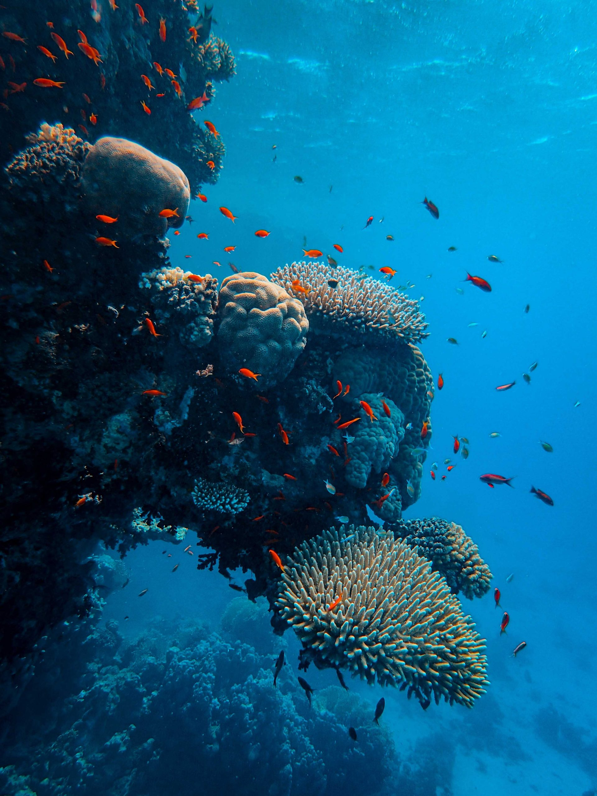 El Parque Nacional marino de Hawai
