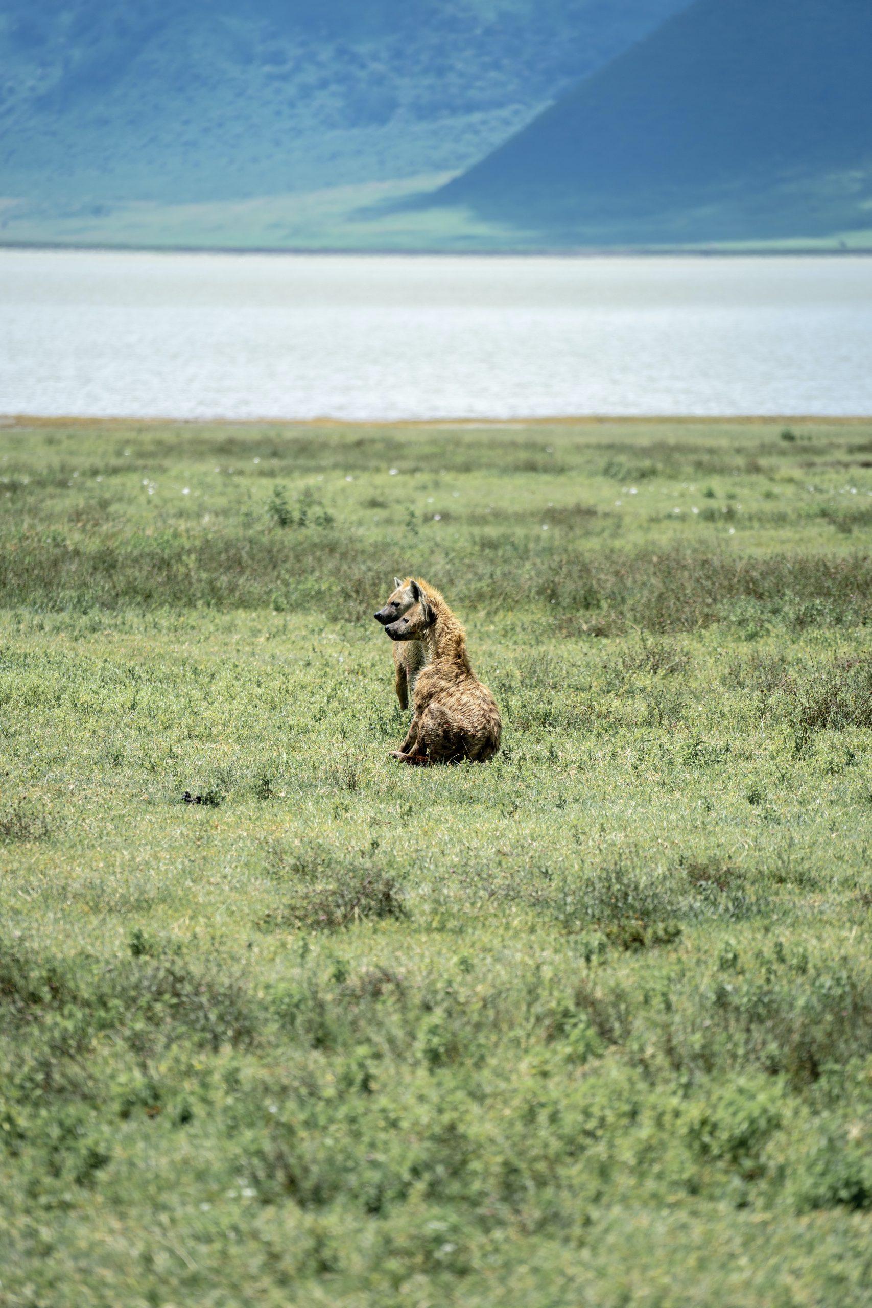 Cráter de Ngorongoro, Tanzania