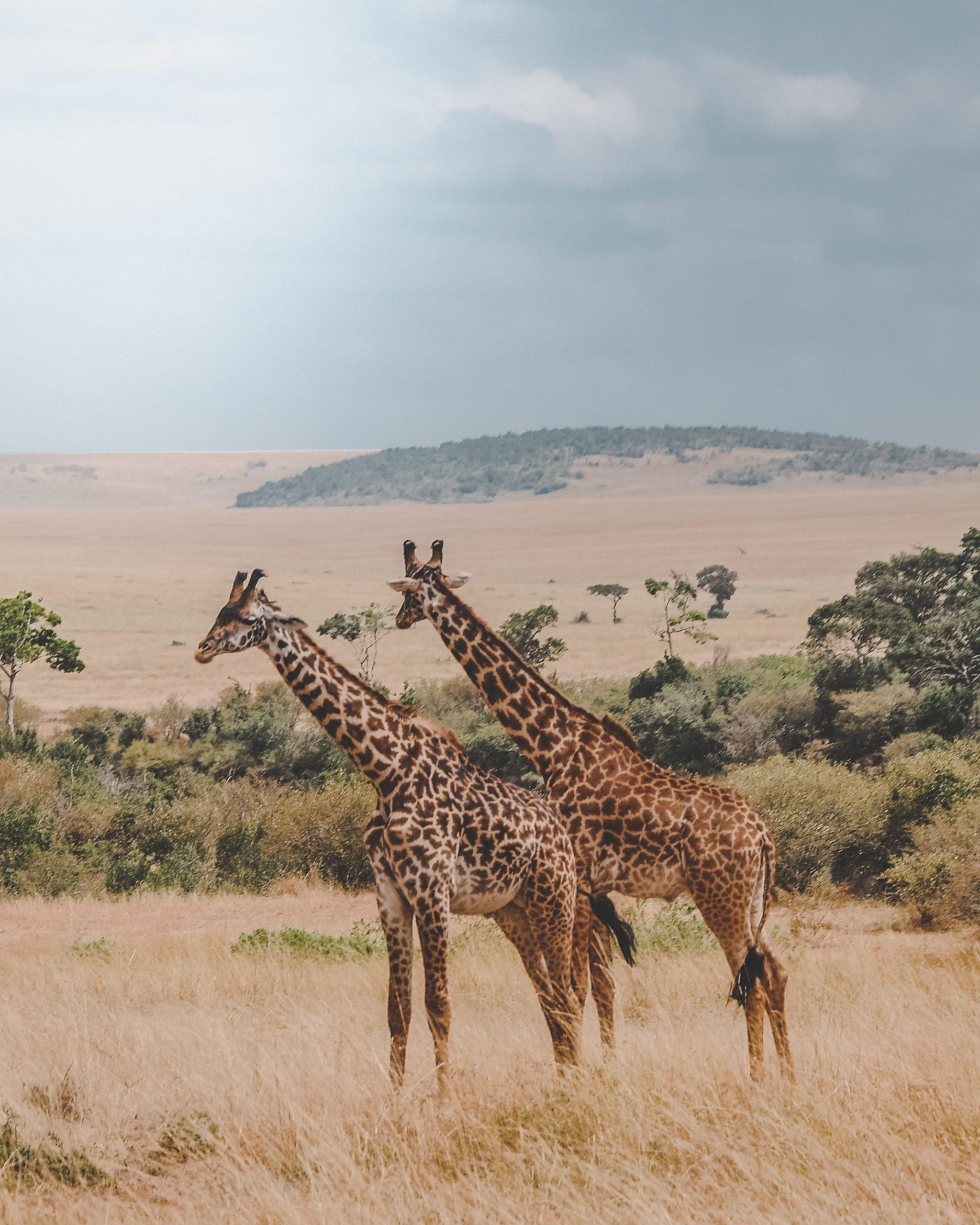 Reserva Nacional Masai Mara, Kenia
