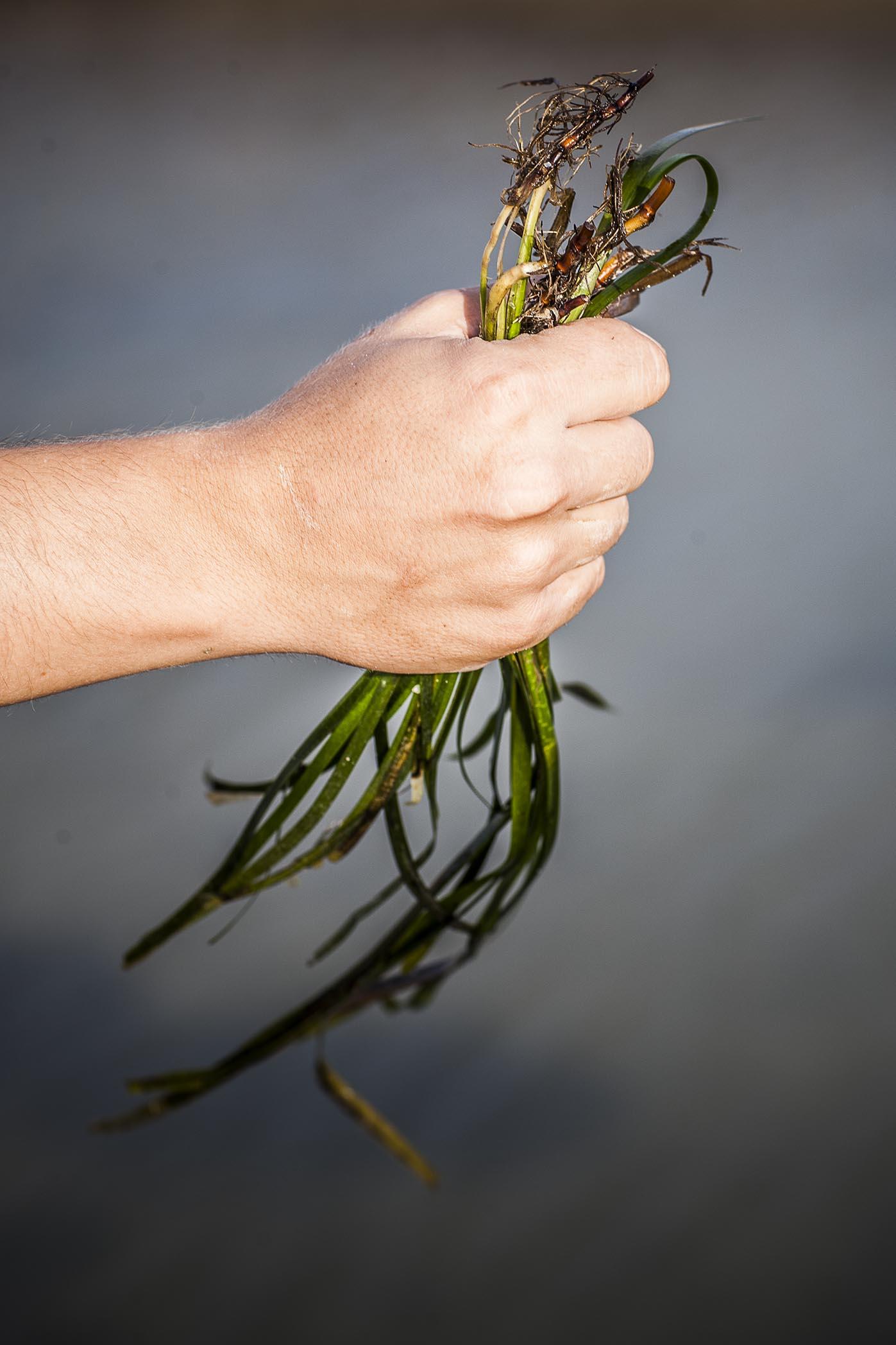 El arroz del mar / Foto: Aponiente