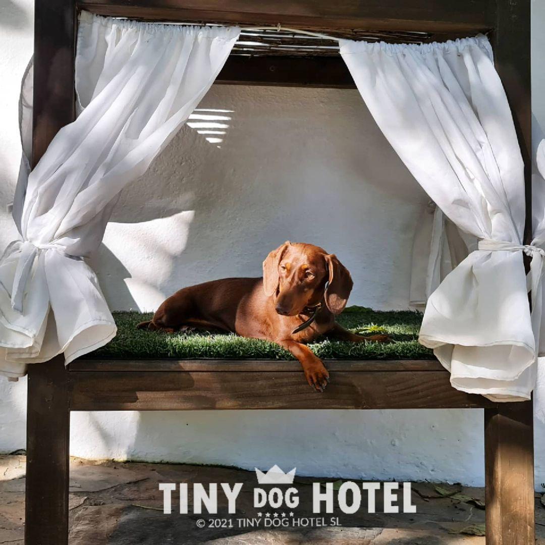 Residencias para perros