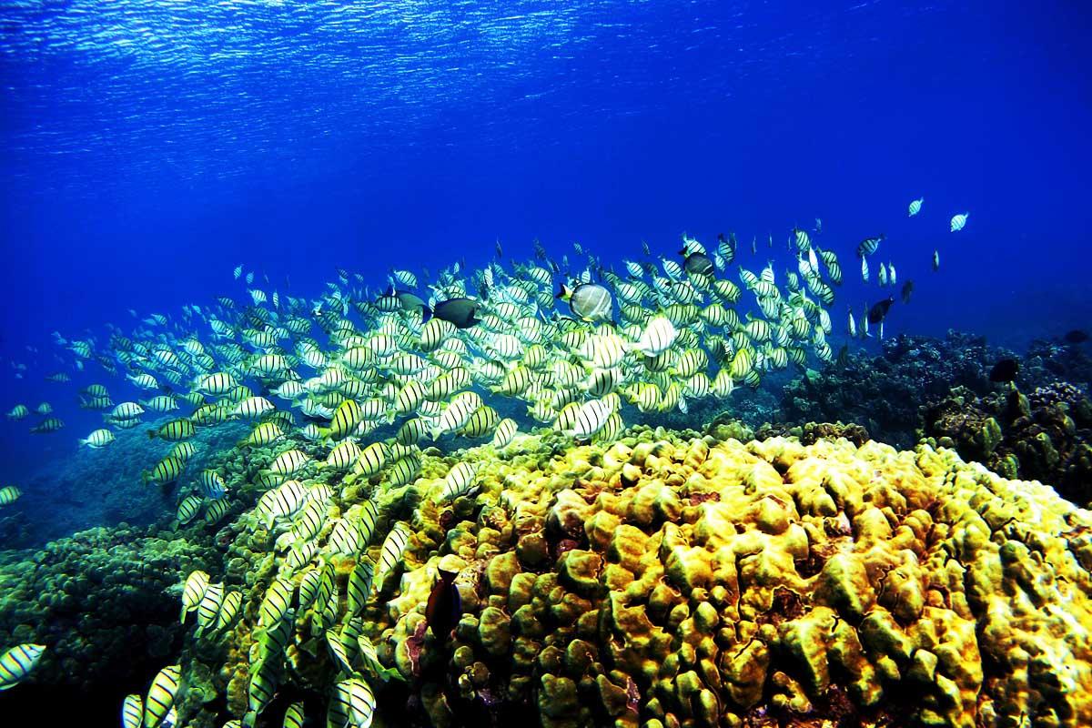 Imagen de un arrecife de coral. (Foto: Getty)