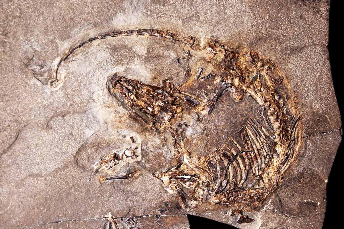Imagen del fósil encontrado en Cuenca. (Foto: EFE)
