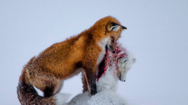 Wildlife-Photographer-of-the-Year
