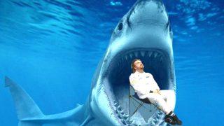 Fernando Alonso está siendo atacado por un tiburón (Foto: Twitter)