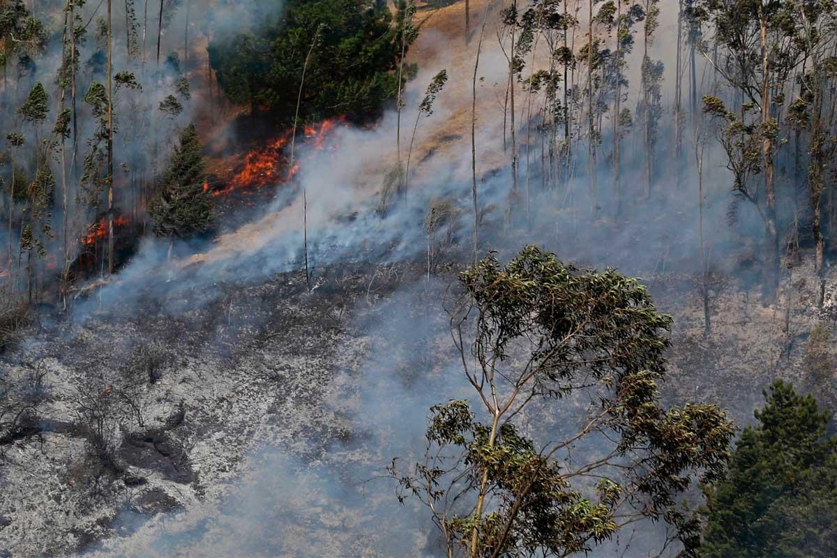 Imagen de un incendio en un bosque de Colombia. (Foto: AFP)