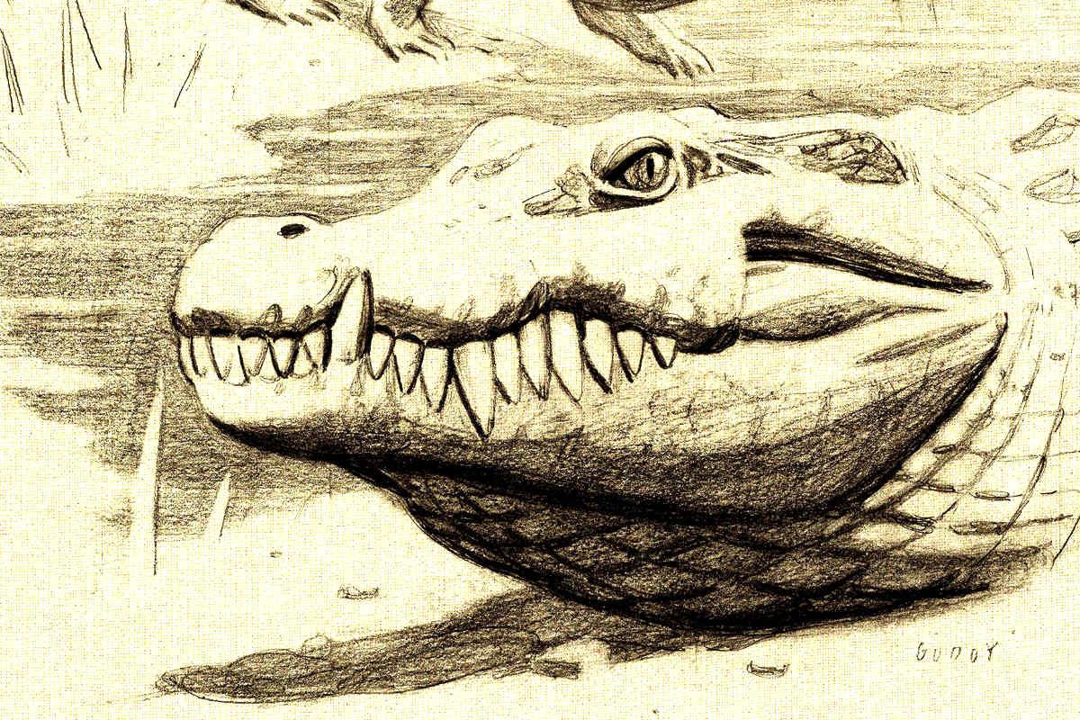Dibujo que reconstruye cómo podía ser el cocodrilo (Foto: Efe)