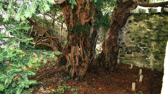 Tejo-Fortingall