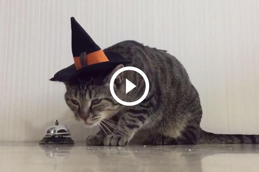 Este gato sabe qué hacer para que le den comida