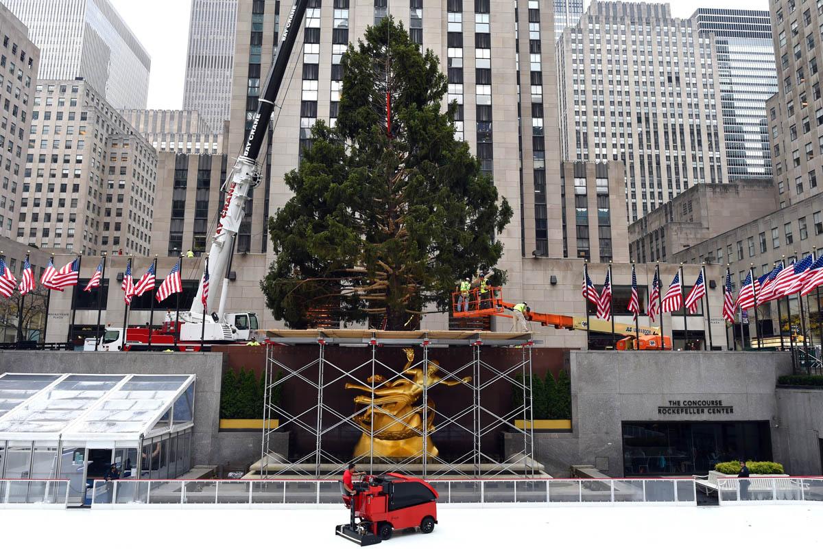 Cuatro generaciones de la familia Asendorf han crecido junto al árbol en Gardiner, en el estado de Nueva York. (Foto: AFP)