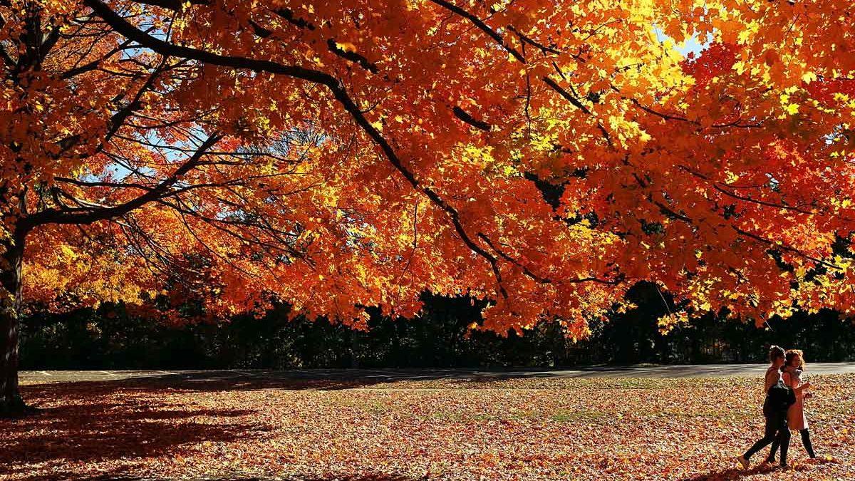 Prospect Park, en Brooklyn, Nueva York. (Foto: AFP)