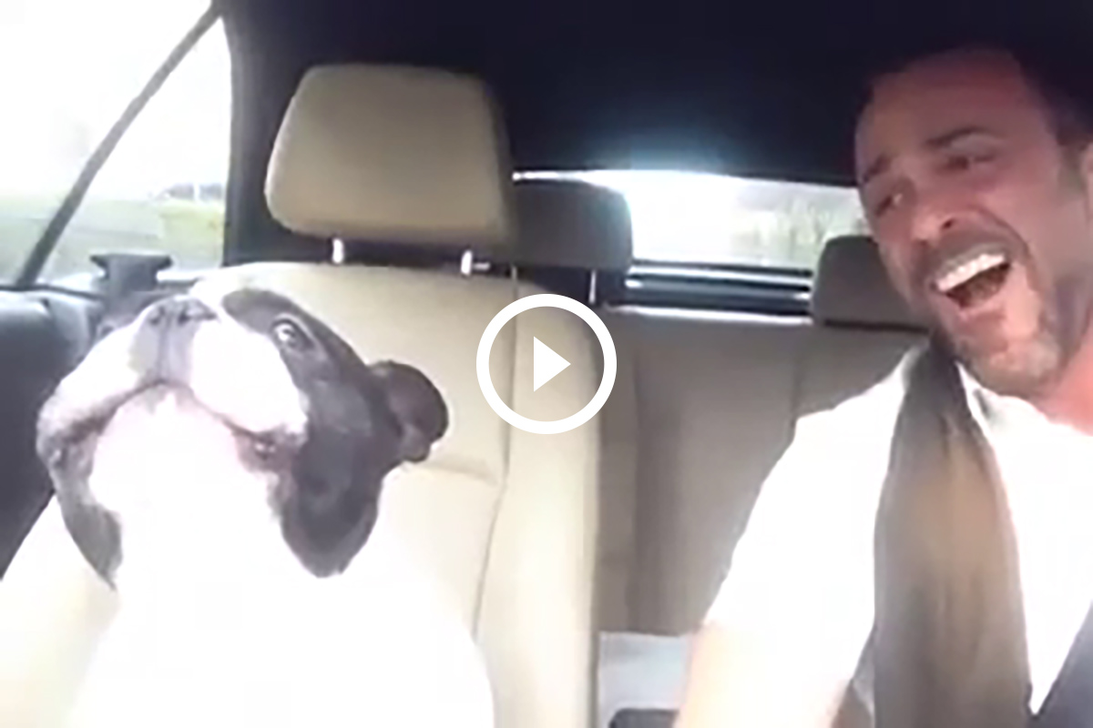 perro cantarin