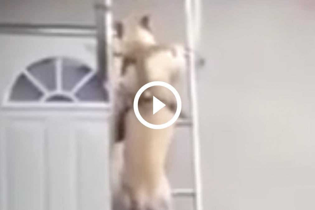 ¡Qué perro más inteligente!