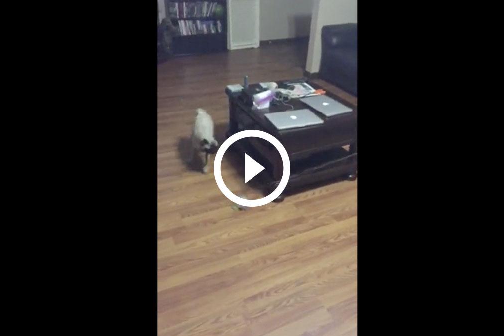 Perro entrenando en casa