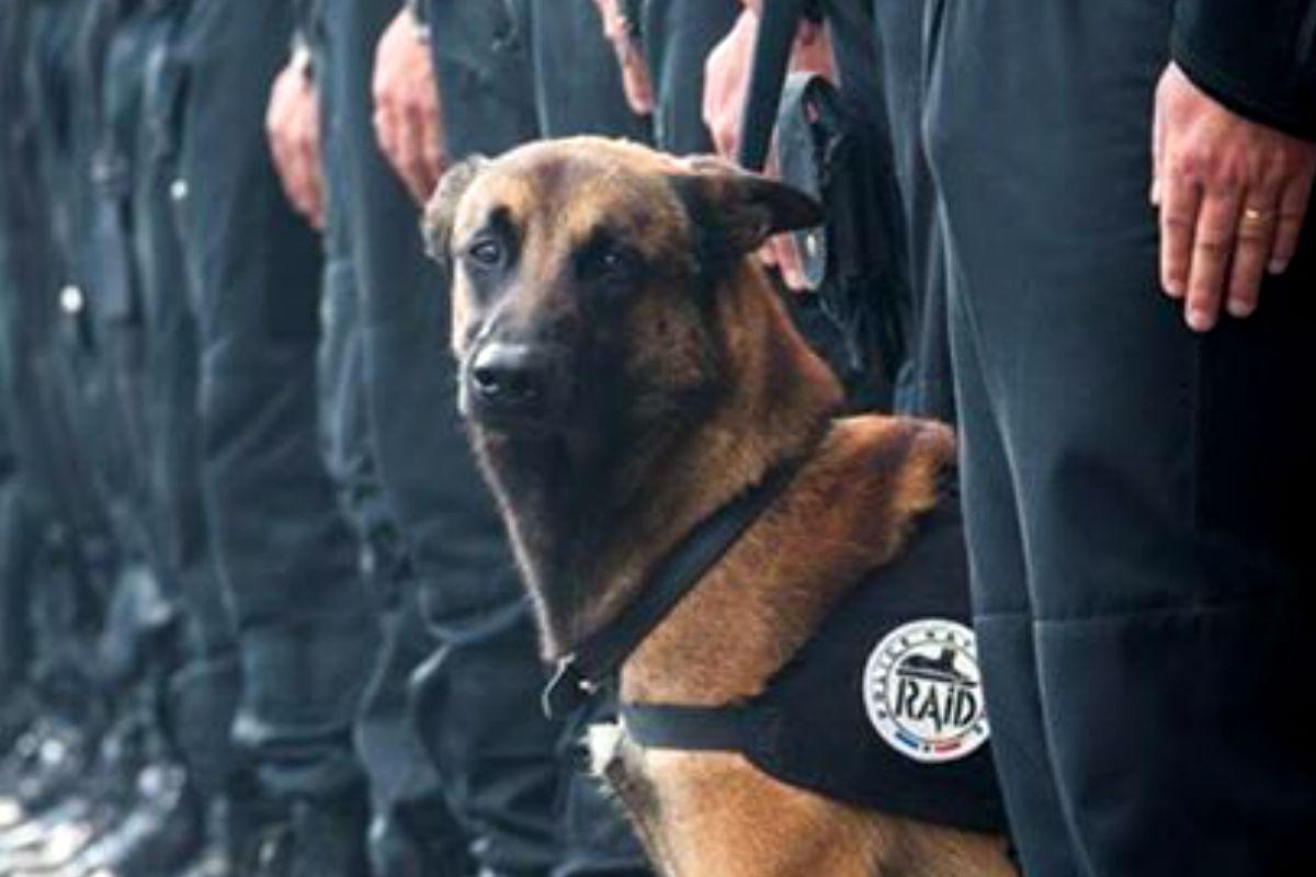 Imagen del perro policía Diesel que formaba parte del cuerpo de operaciones francés RAID. (Fuente: Perfil oficial de la policía nacional francesa)