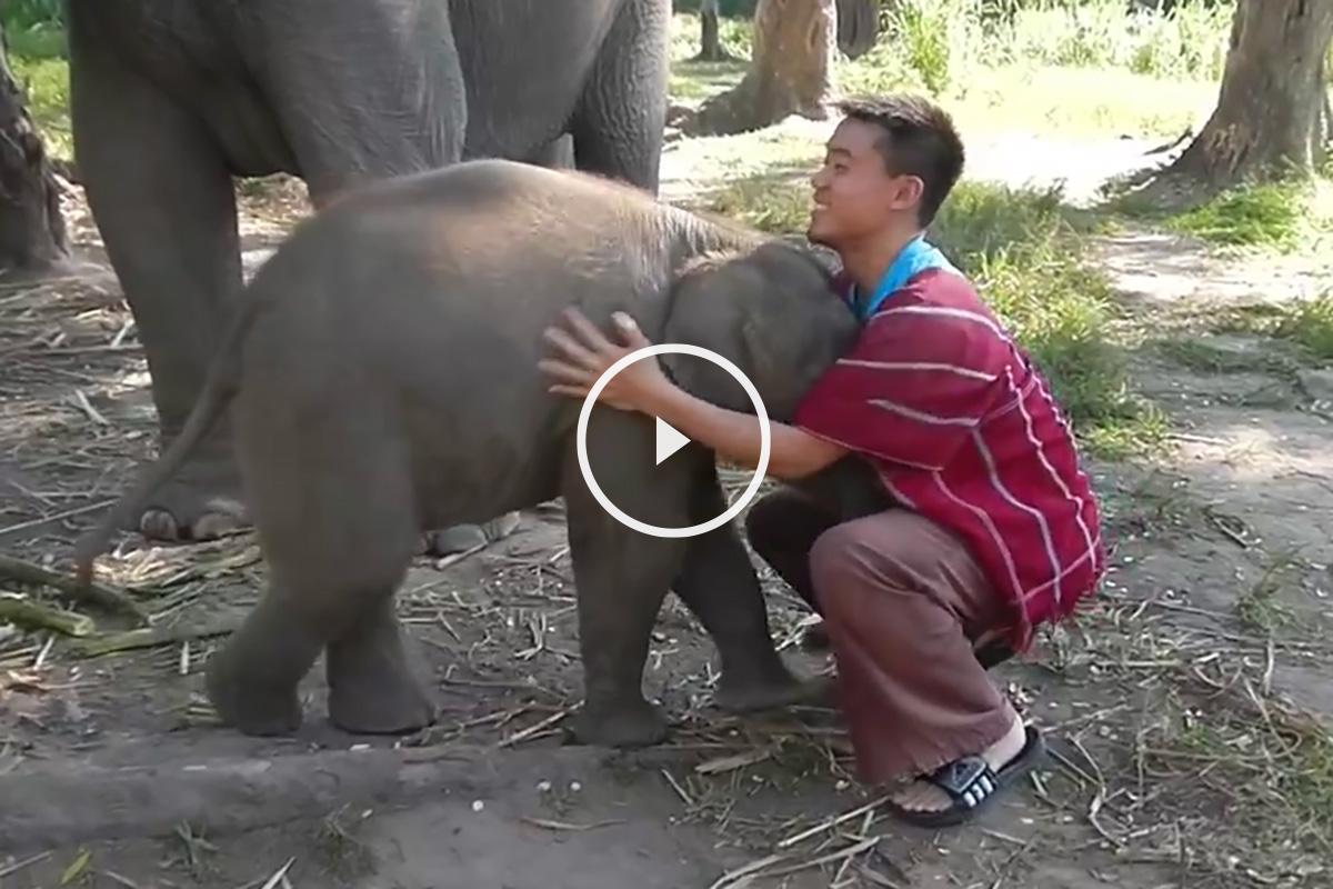 Elefante bebe real related keywords elefante bebe real - Fotos de elefantes bebes ...