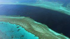 Gran Barrera de Coral. (Foto: AFP)