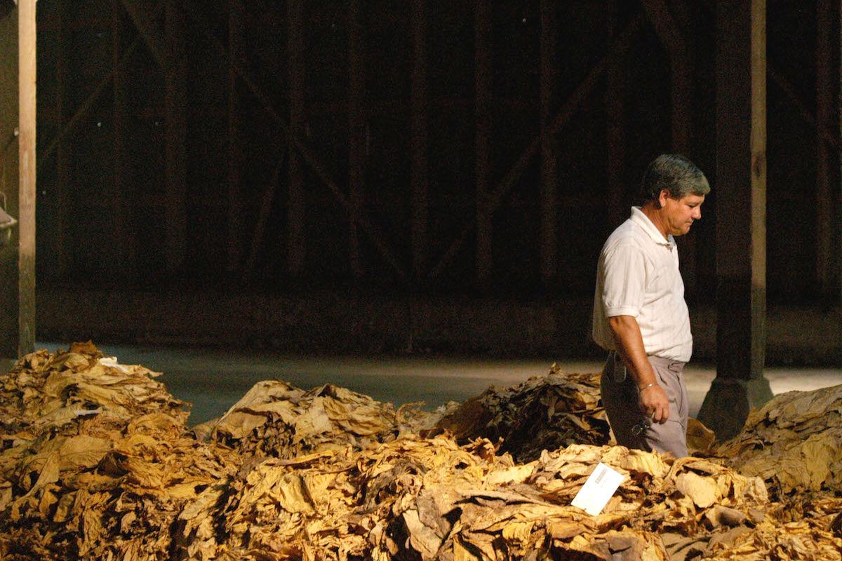 Subasta de tabaco en Extremadura (Foto: GETTY)