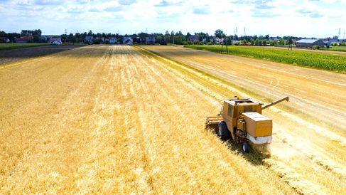 Los recursos agrícolas, como el máiz o el trigo, se engloban dentro de la categoría agrícola de 'commodities' (Foto: GETTY/ISTOCK).