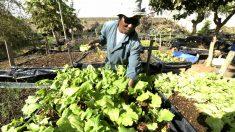 Un agricultor trabaja en un huerto. (Foto: AFP)
