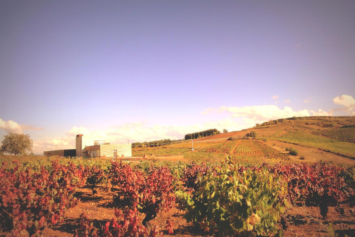 Camino y vino (Foto: Wikimedia/Losada)