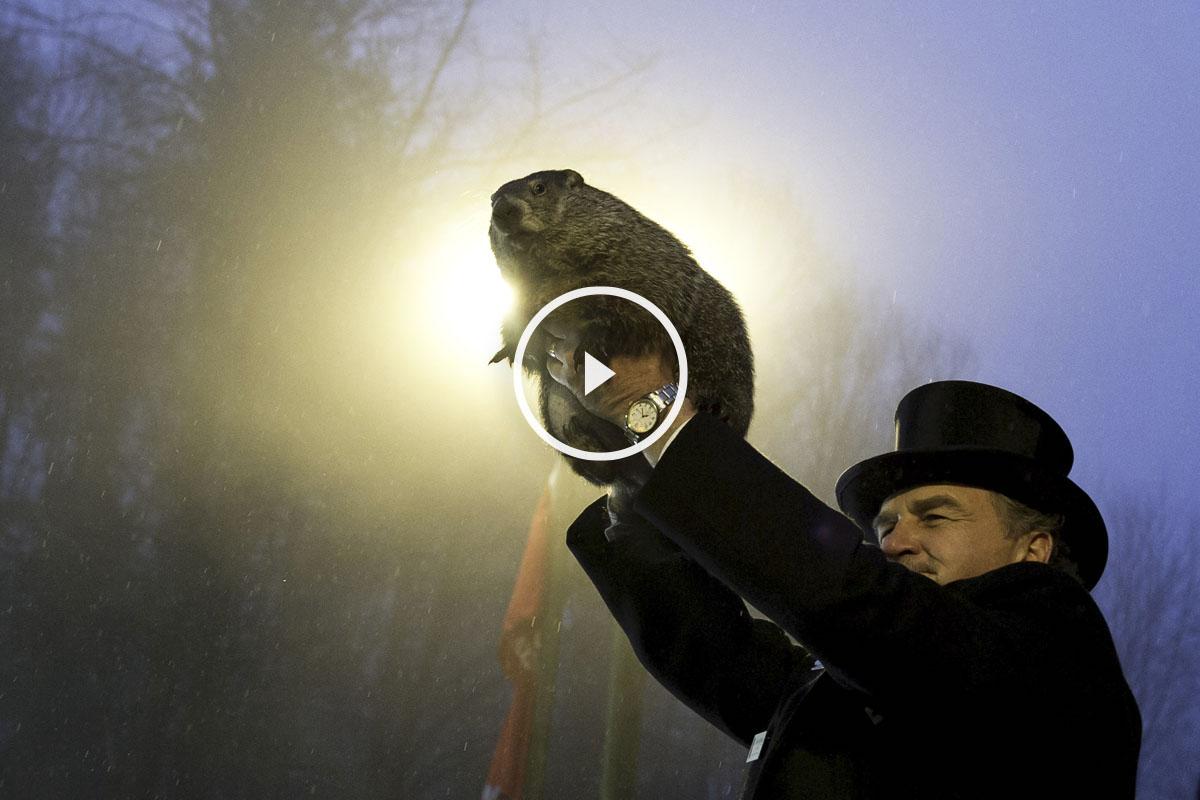La marmota Phil. (Foto: AFP)