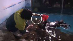 Nutria del zoo de Japón celebrando San Valentín