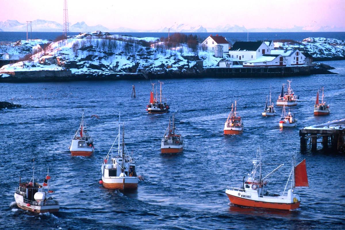Pesca del Skrei en el Mar de Barents, en el archipiélago de las Islas Lofoten.