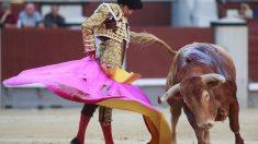 Sebastian Castella, en acción con el capote el día que abrió la puerta grande de Las Ventas (AFP)