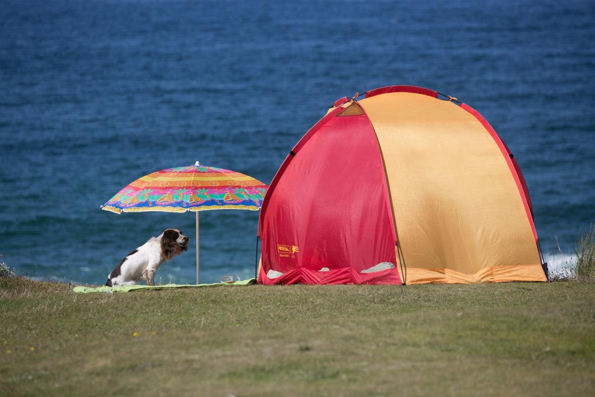 Barcelona destinará una playa para perros este verano