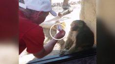 Magia a un mono