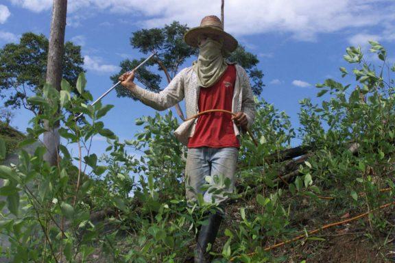 colombia-coca
