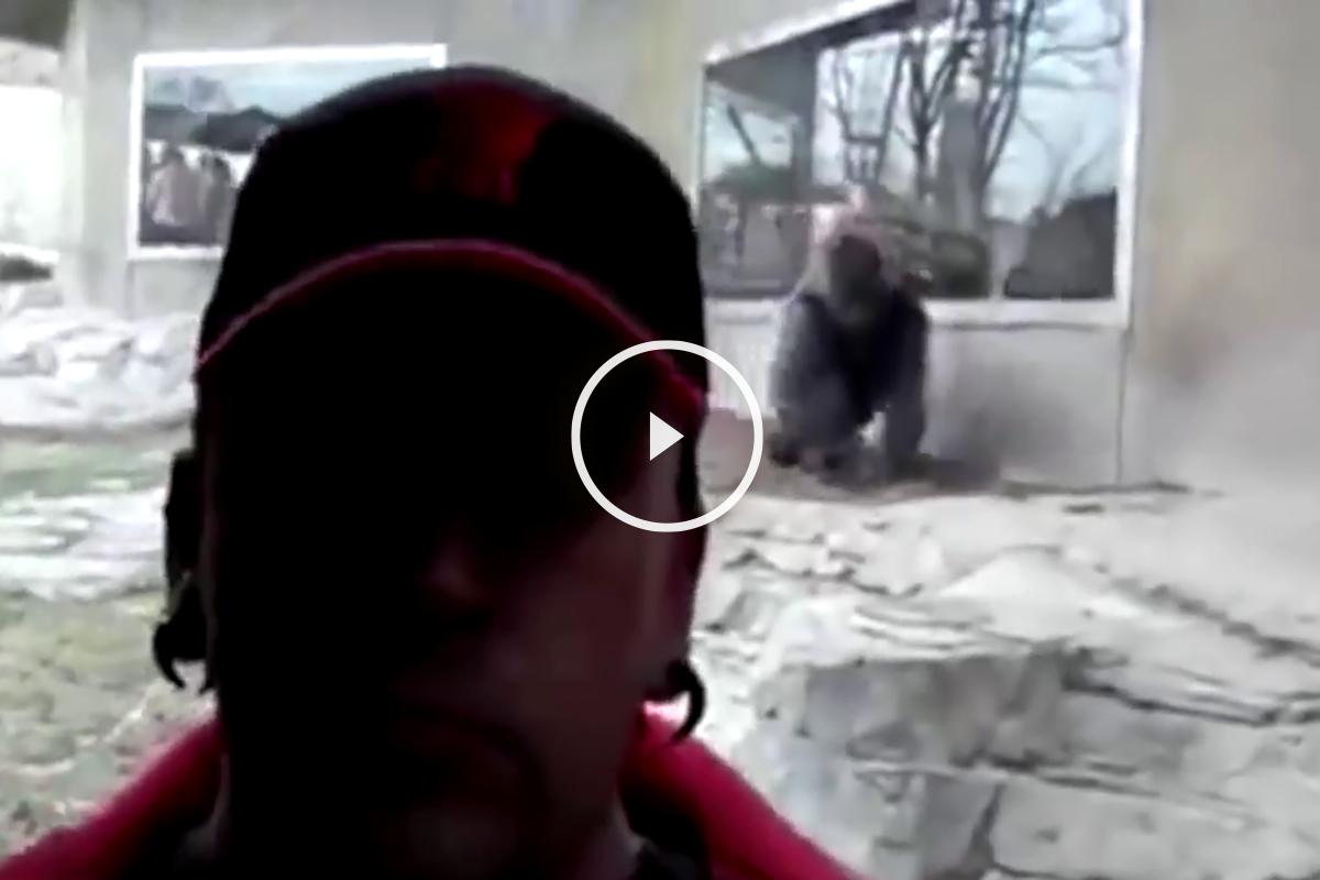 Ataque gorila