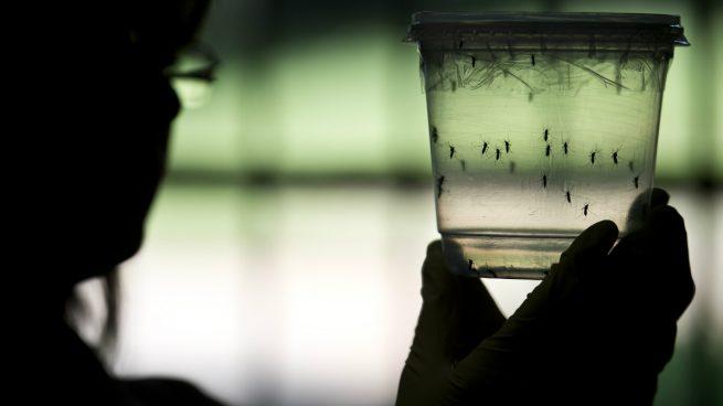 zika-mosquito-cdc-virus