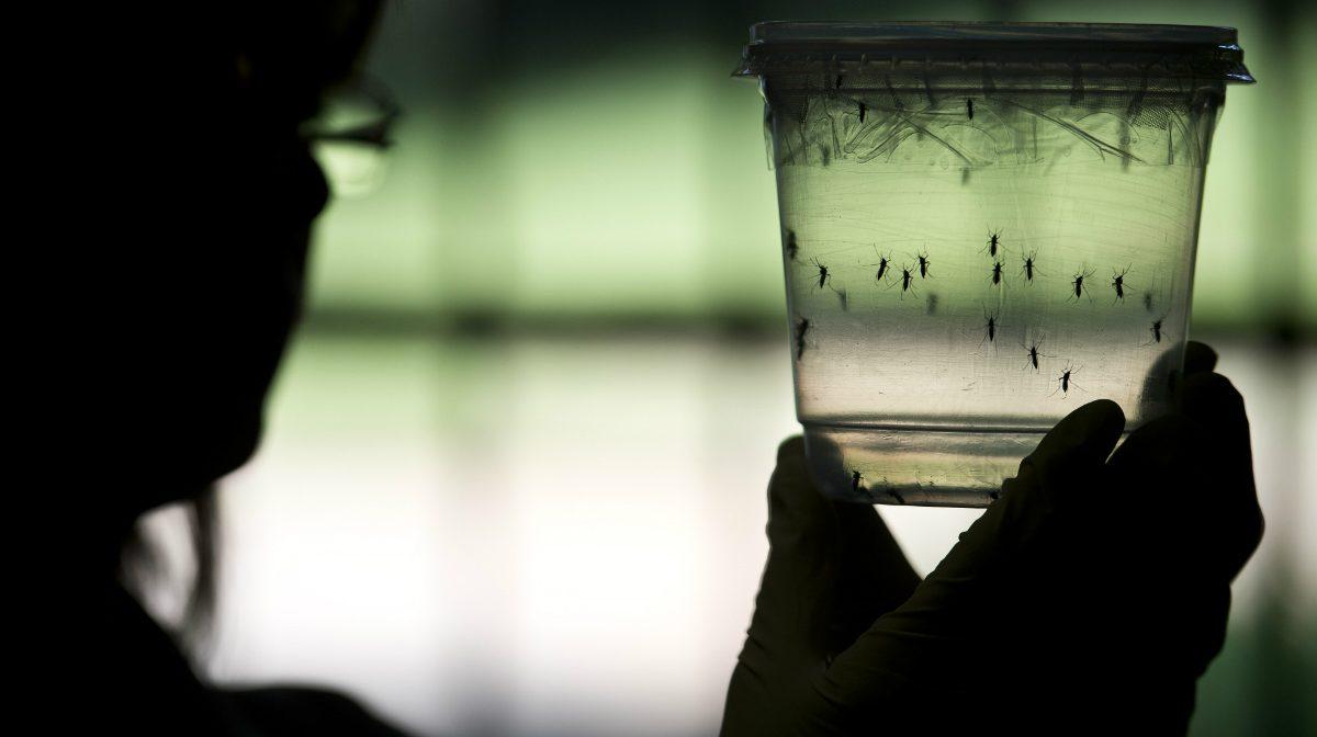 Un investigador sostiene un contenedor con mosquitos Aedes Aegypti, causantes del Zika. (AFP)