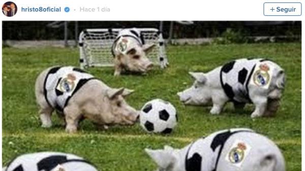 Stoichkov compara a los jugadores del Real Madrid con unos cerdos.