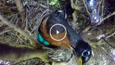 serpiente-huevos
