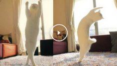 gato-ballet