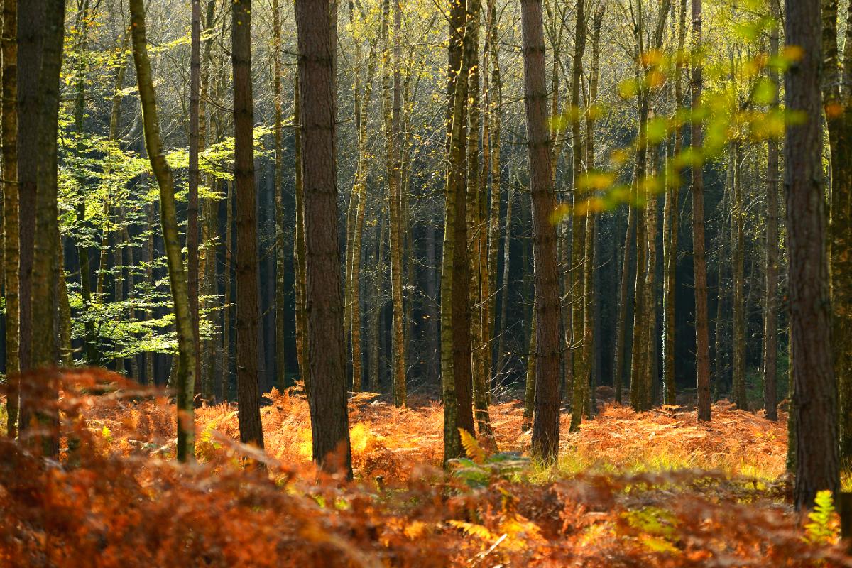 Bosque en Reino Unido (Foto: GETTY).