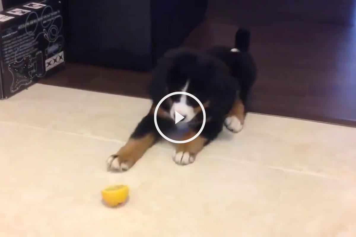 perro y limon
