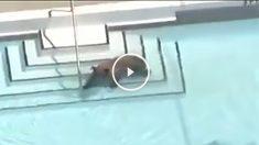 oso-piscina