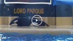 orca-suicidio