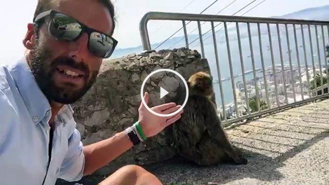 Okjeda intenta robar un mono en Gibraltar para salvarlo del Brexit