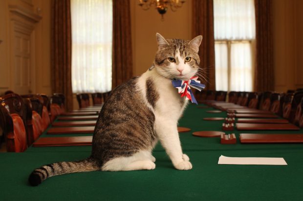 larry-gato-downing-street-cameron