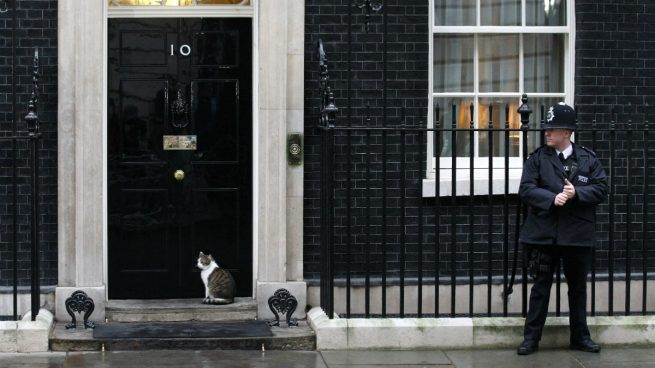 larry-cat-downing-street