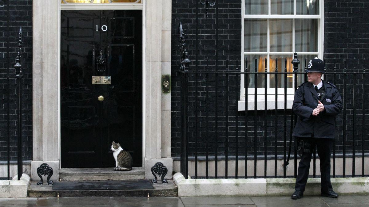 Larry, a las puertas de su residencia, el número 10 de Downing Street. (Getty)