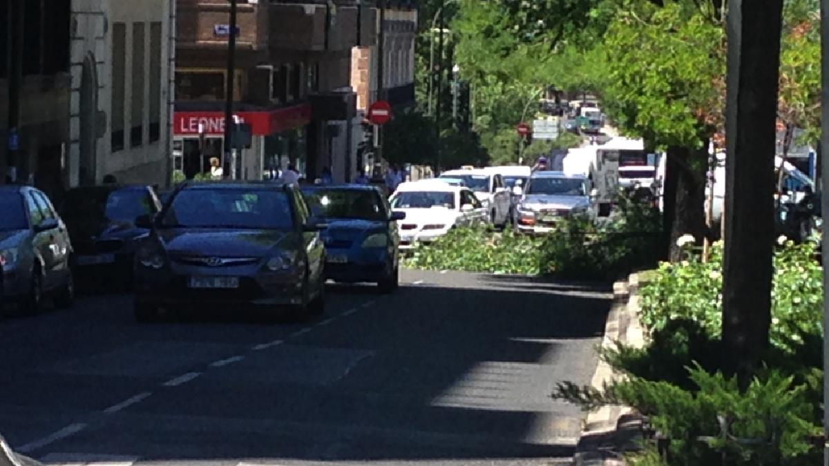 Nueva caída de un árbol en el centro de Madrid. (Foto: TW)