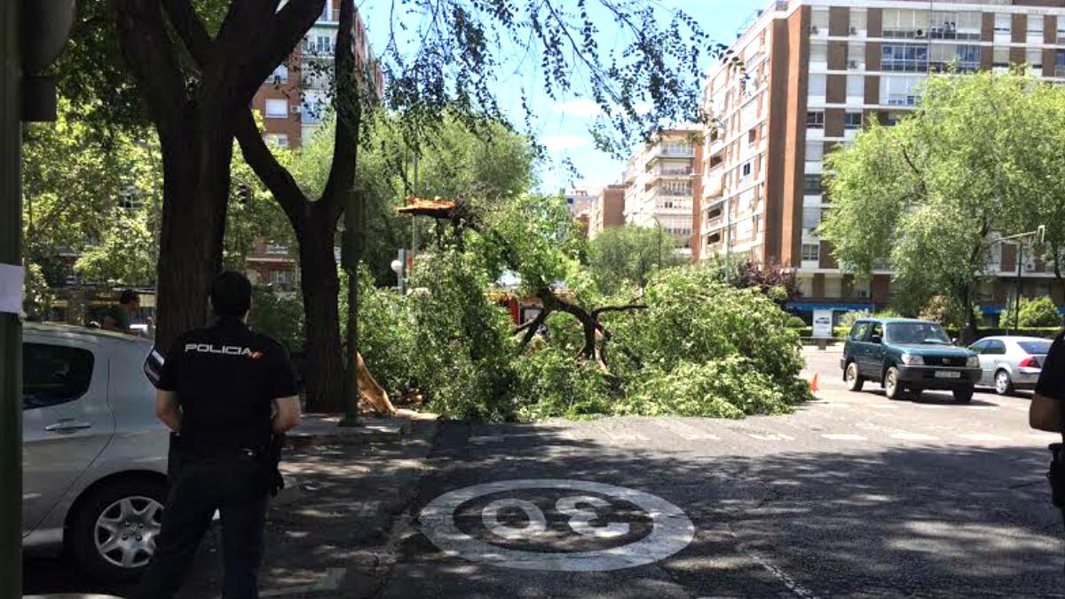 Árbol caído en la calle Príncipe de Vergara.